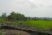 The Sungai Lulut Village is located inside Tanjung Puting National Park