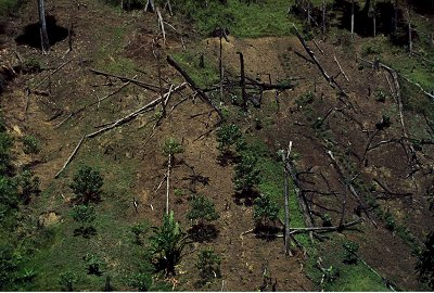 asean the effects of illegal logging Hopefully it comes as no great surprise to you that deforestation is a major problem in many areas of the world,  logging operation in the niger river delta,.