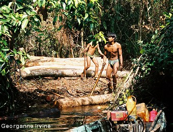 Illegal loggers working in the forest in Lamandau.