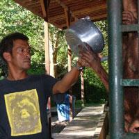 Pak-Sia-Feeding-Orangutans-OCCQ2-e200