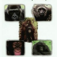 Signed – All Apes Great and Small