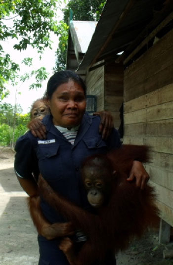 Ipuk brings two orangutans to the playground