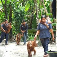 taking-orangutans-out-200