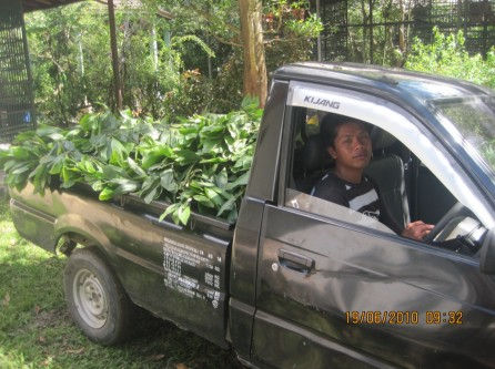 Mr.Gatot bringing fresh branches to the Care Center