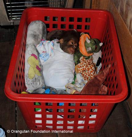 New orphan in nursery, resting.