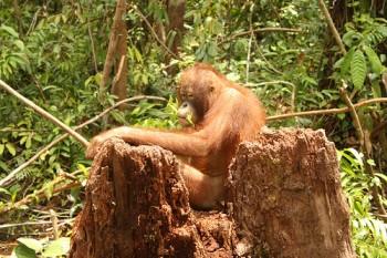 Omry on tree stump.