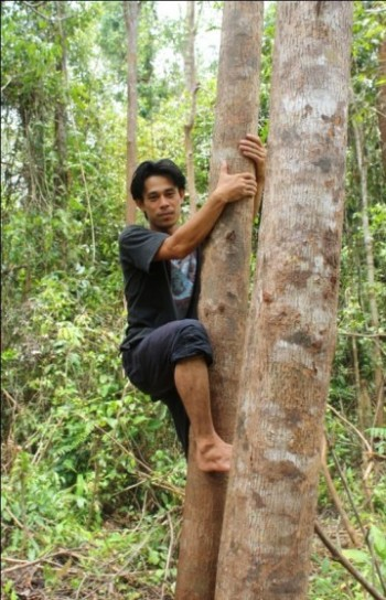 Pak Ateng must often climb tall, branchless trees in order to locate the orangutans