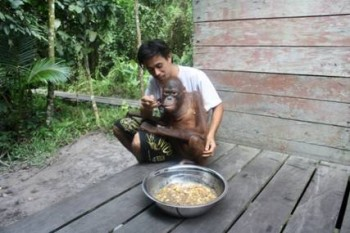 "Pak Ateng helps to feed ""Xena"" a tasty meal of mung beans"
