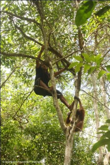 Mr. Iim climbing with Berman in the canopy.