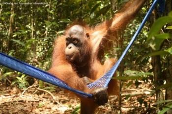 Berman examines Mr Iim's hammock
