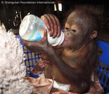 Luna drinking milk