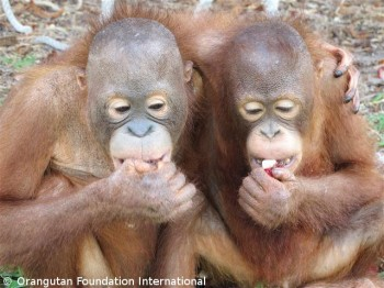 Lear (left) and William share a friendly embrace while enjoying a snack of rambutans.