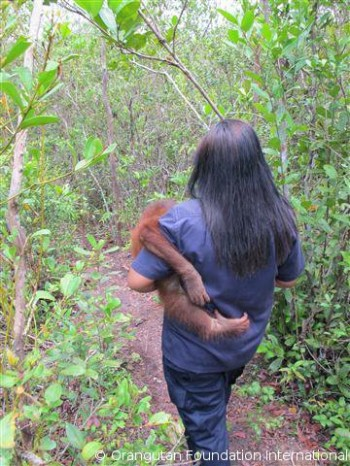 Uttuh and Miss Tika on the way to the forest.