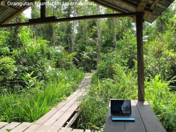 Office in the forest