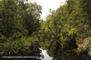 The Sekonyer River
