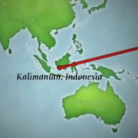 Orangutan Eco Tour Kalimantan Indonesia Travel to Borneo Indonesia with trimate primatologist Dr Birute Mary Galdikas