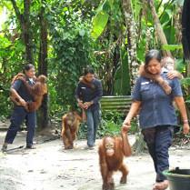taking-orangutans-out