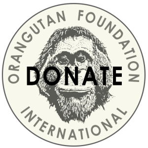 Donate to Orangutan Foundation International
