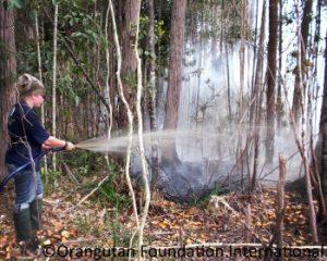Fires orangutan