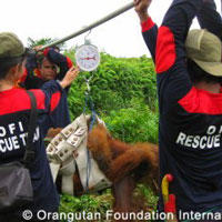 rescue-200