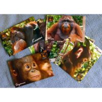 Box of Postcards from Camp Leakey