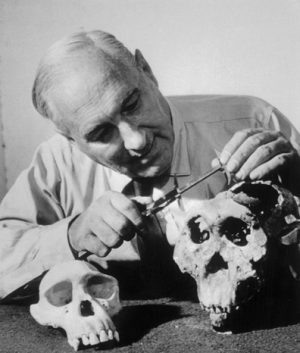 Louis Leakey examines a hominid skull found in Olduvai Gorge.