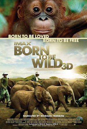 Born-To-Be-Wild-Movie-Poster.jpg.w300h444