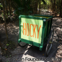 hockeys orangutan cart