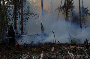 2015-08-23_Rawa_Kuno_Fire_RL_004_wm