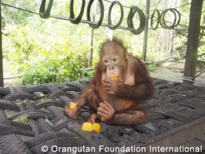Ryan sampling fruit ice at playground