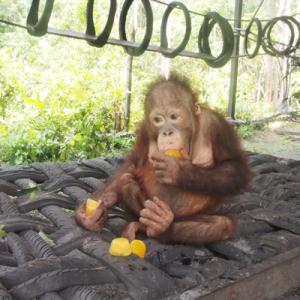 Ryan-sampling-fruit-ice-at-playground-400