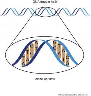 Figure: DNA