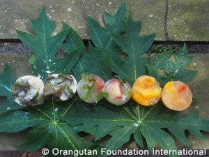 orangutan fruit ice versions 2