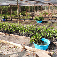 2016-04-01_herbarium_nursery_MHP_05_THUMBNAIL