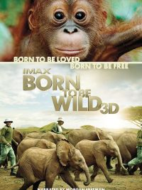 Born to Be Wild Orangutan Foundation International
