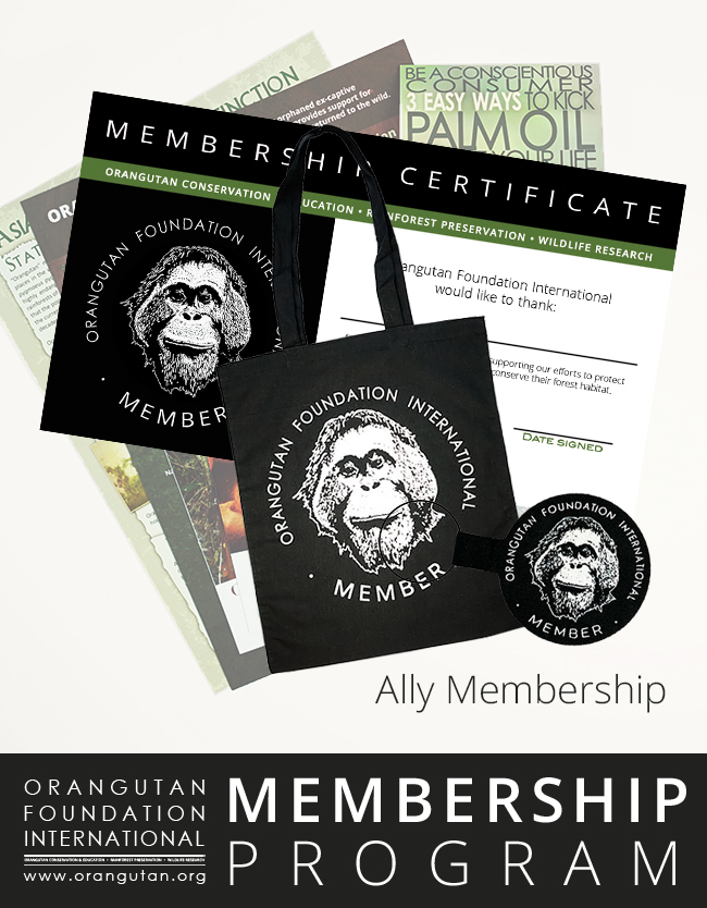 Orangutan Foundation International Member Program Ally Membership save orangutans