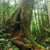 Orangutan Legacy Forest Orangutan Foundation International