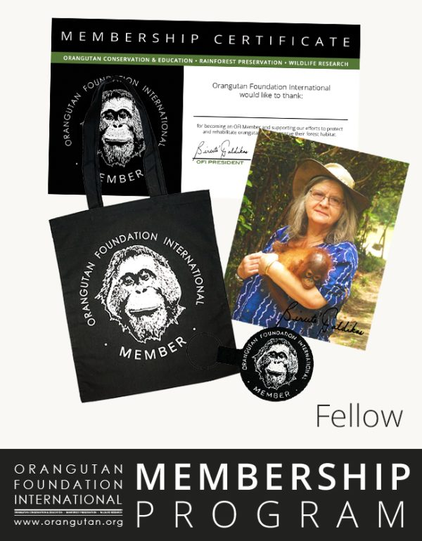 Orangutan Foundation International Membership Program fellow save orangutans