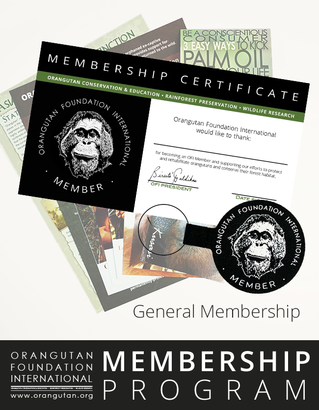Orangutan Foundation International Member Program General Membership save orangutans