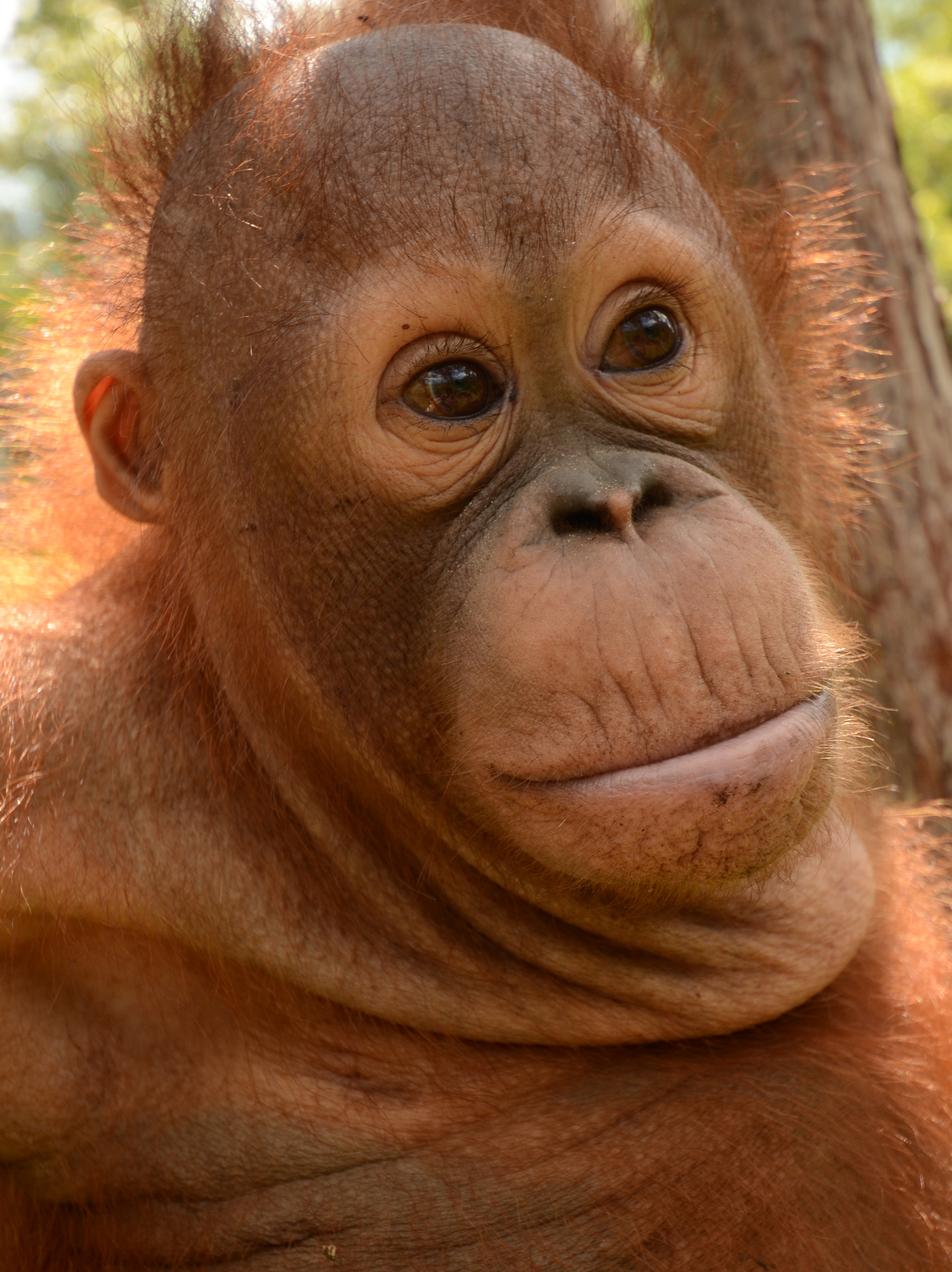 Mr Bernie Orangutan Foundation International Foster Program