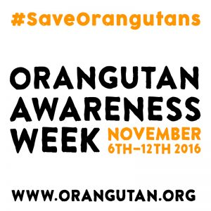 Orangutan Awareness Week Orangutan Foundation International