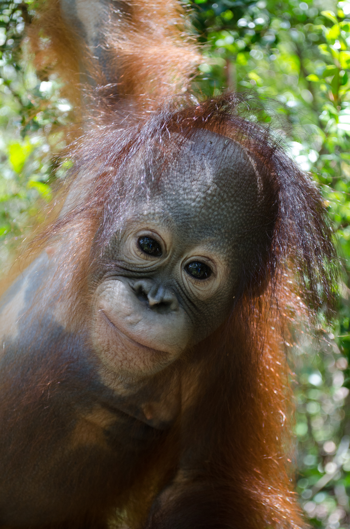 Cory Marder Foster Orangutan Foundation International