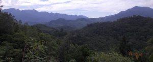 Kudangan Forest Borneo Indonesia Orangutan Foundation International