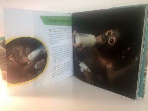 Orangutan Orphange Suzi Eszterhas Children's Books