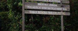 Taman Nasional Tanjung Puting National Park Orangutan Foundation International