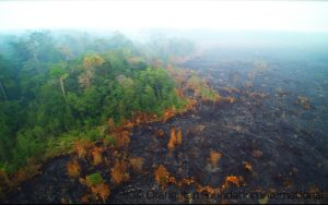 Orangutan Foundation International Replanting Forest Seed Sapling Appeal