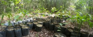 Orangutan Foundation International Replanting Forest Seed & Sapling Collection