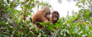 Orangutan Foundation International Boycott Palm Oil App