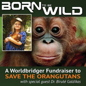 Born to be Wild Screening Dr Birute Mary Galdikas Vancouver Island University Nanaimo Campus British Columbia
