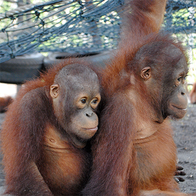 Orangutan Foundation International Ray & Vytas